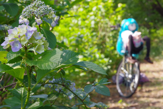 紫陽花と自転車に乗ったえむ
