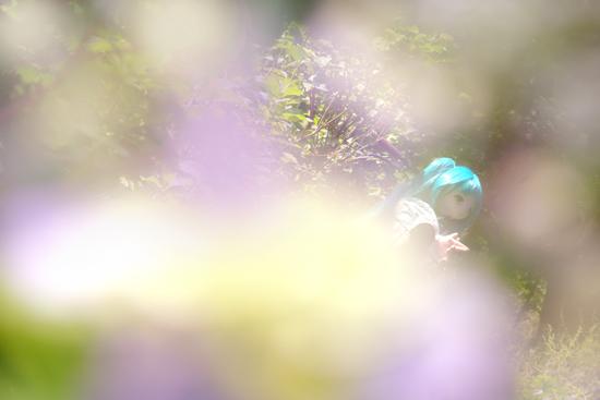 紫陽花の中のふぇありーどーる えむ
