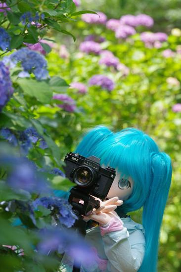 カメラを構えるふぇありーどーる えむ
