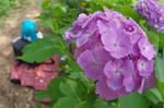ふぇありーどーる えむと紫陽花の花
