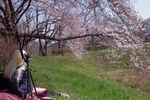 ふぇありーどーる 「おすわり」のの、春風に誘われて桜を撮影に!(1)