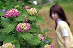 愛ちゃん、初めての紫陽花撮影
